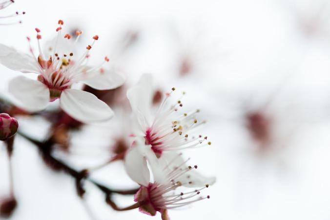 flower-673296_1280